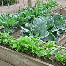 Self-sufficiency – Vegetable growing