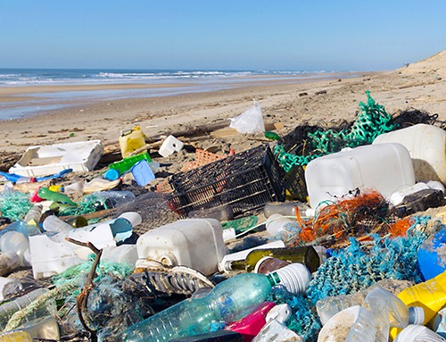 The plastic plague